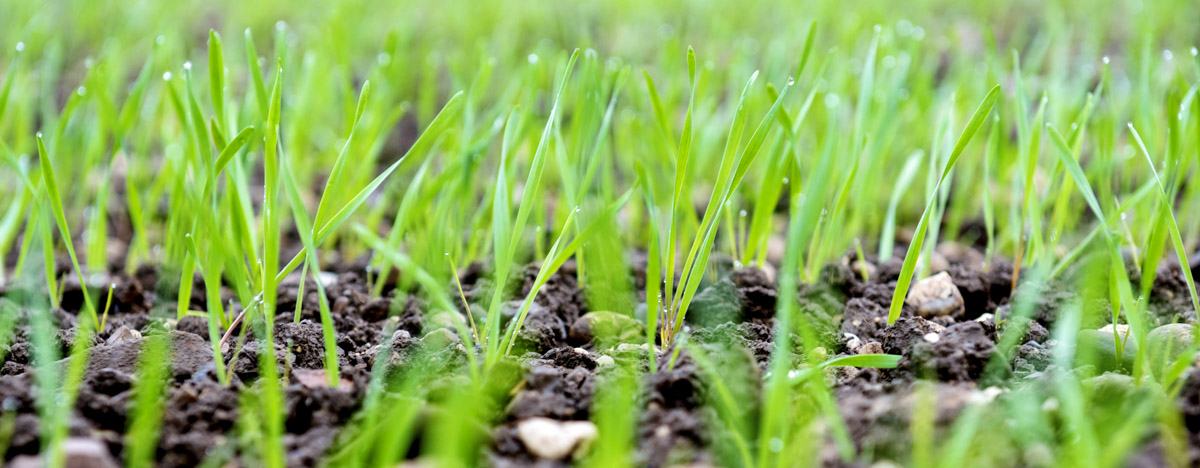 Specialty Fertilizers: Adoption of precision farming driving the growth