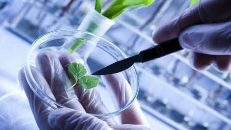 Biotechnology Today - The Bio Revolution That's Positively Impacting Economies and Lives